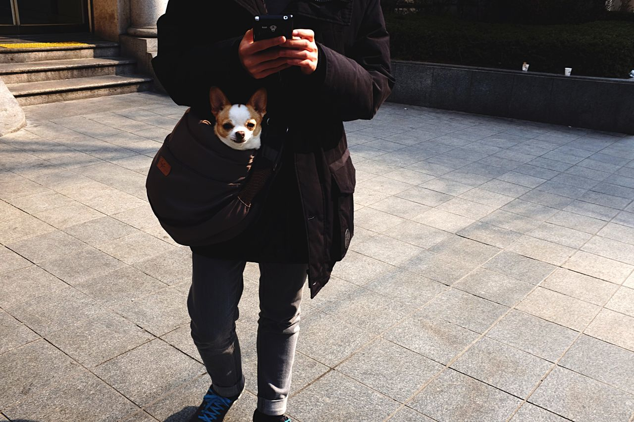 Low section of person with dog in bag at footpath