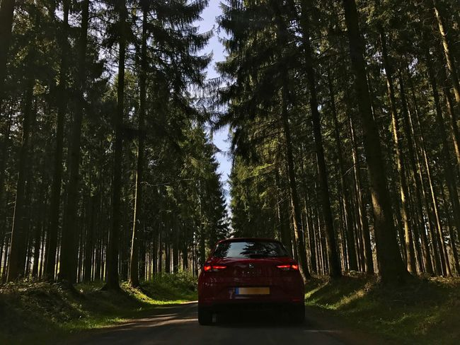 Tree Tree Trunk Car Transportation Land Vehicle Road Day Forest Growth Nature Outdoors No People Sky Seat Forest Cupra