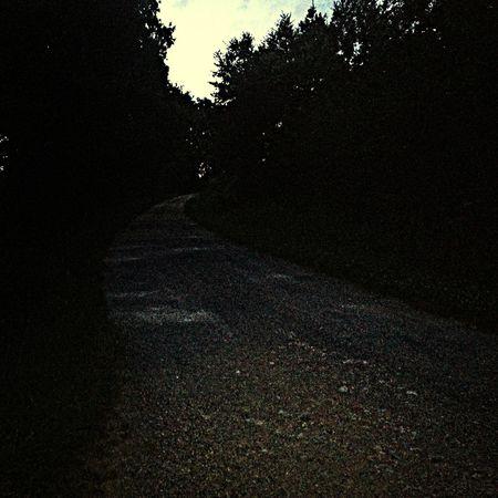 Road Night Black Tree