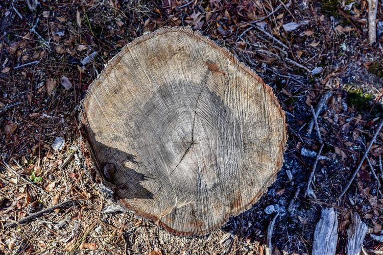 Bradley Olson Bradleywarren Photography Cross Section Deforestation Environmental Issues Farm Life Forest Forest Trees Fuel And Power Generation Fueling The Imagination Log Logs Lumber Industry No People Rural Rural America Rural Life Scenics Timber Tree Tree Ring Tree Stump Trees Wood Wood - Material