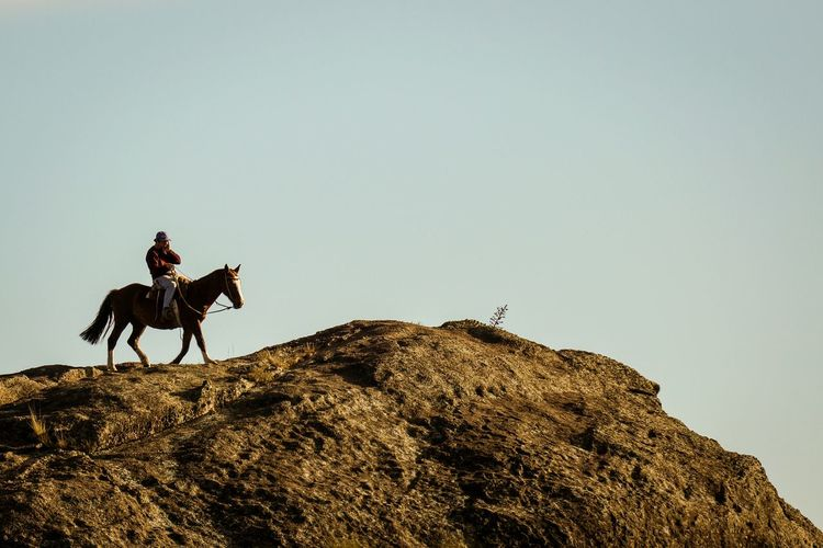 Side view of horse ride on rocky surface