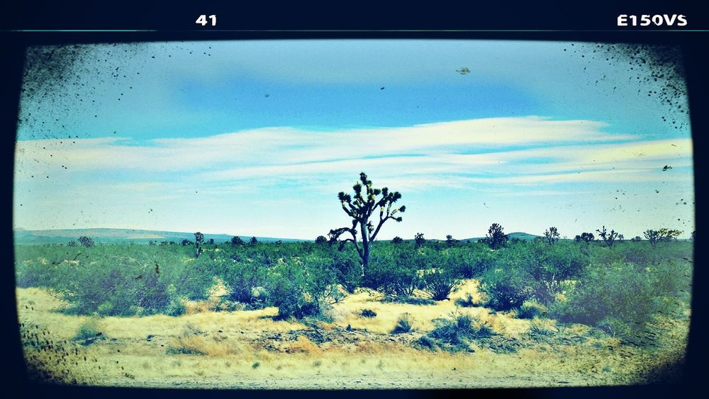 Mojave DesertThe Environmentalist – 2014 EyeEm Awards Desert Beauty Beautiful Nature Mojave National Preserve