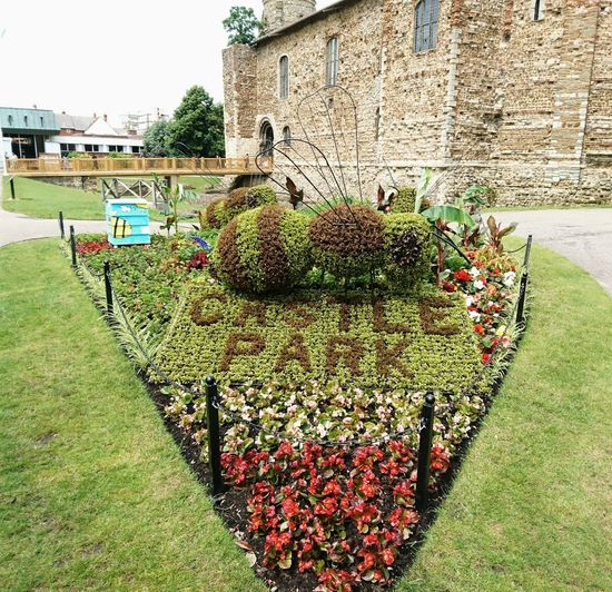Colchester Castle Colchester Summer Bee Topiary Flowers Summertime Essex