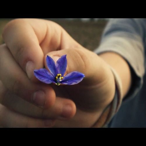 Flower Hand Nature EyeEm Nature Lover Colors Purple Purple Flower Blue Blue Flowers