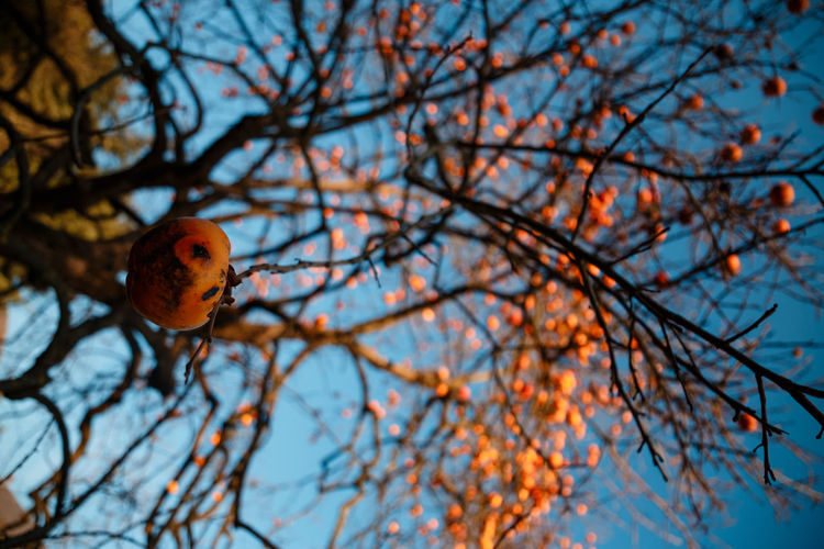 Low angle view of bird on tree