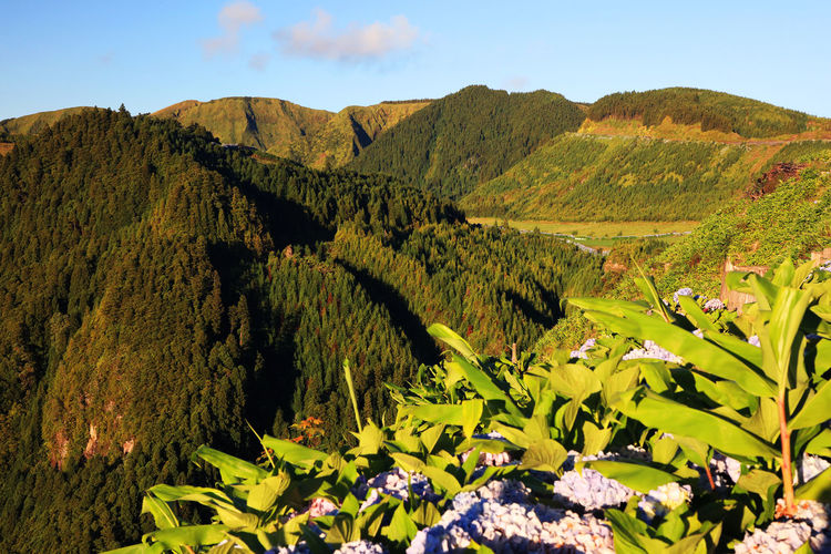 Plants Growing Against Mountains At Azores During Sunset