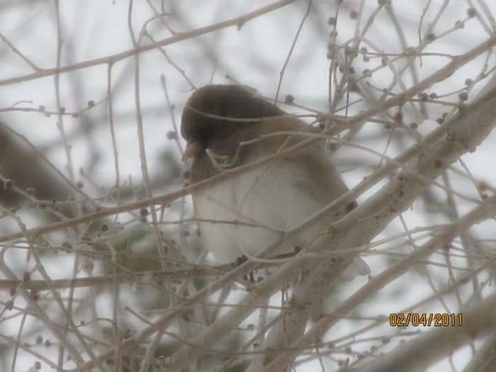 Snow bird Winter No People Animal Themes Outdoors Day Close-up Animal Wildlife Fog Snow ❄ Nature Brown Bird