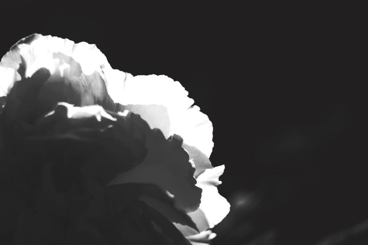 EyeEm Gallery Blackandwhite Black & White Bw_lovers Monochrome Bwflower Hasedera Botan Helios 44-2 Pentaxk7 Flowerporn TENPLES