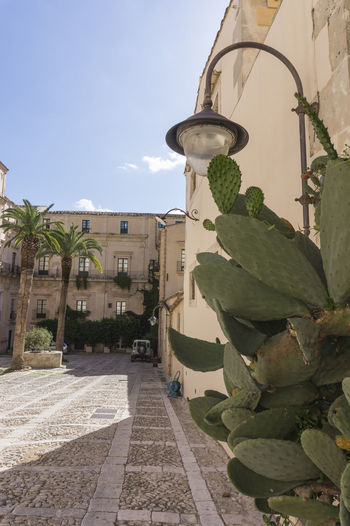 Palazzo Nicolaci Palazzo Nicolaci Building Exterior Built Structure Courtyard  Day Nature Plant Prickly Pear Sky Tree