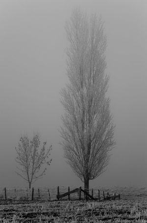 Arbre Arbre En Hiver Bare Tree Brouillard Glacé Brumes Hivernales Campagne Campagnefrançaise Cold Temperature Fog Foggy Day Freeze Freezing Cold Hiver Hiver 2016 Nature No People Outdoors Tree Tree Treewithoutleaves Winter Wintertime