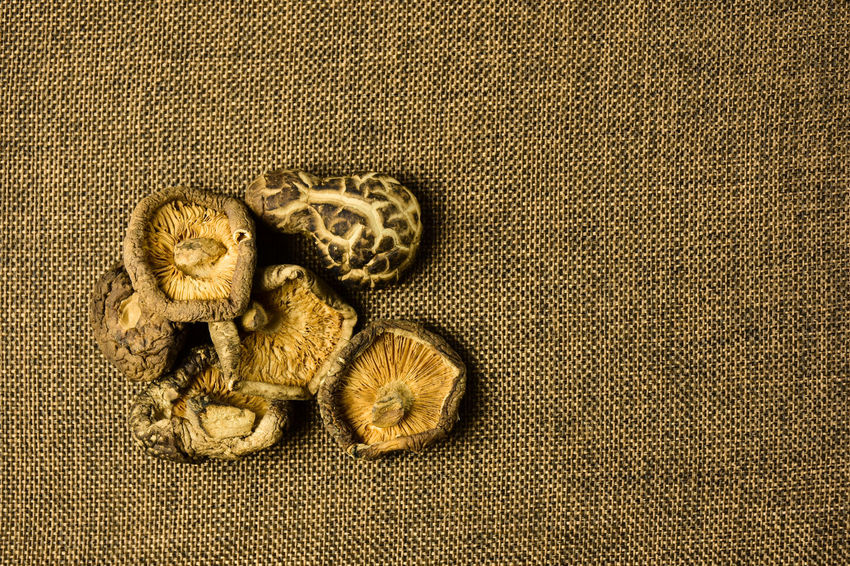 Asian  Medicine Nature Wood Asian Food Brown Close-up Day Dried Dry Fiber Food Grunge Mushroom Nutrition Old Shiitake Shiitake Mushrooms Table Top View Of Food