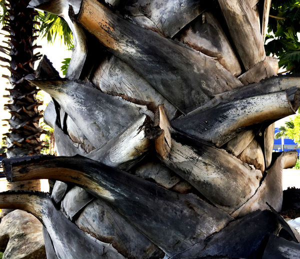Palm Tree Trunk Bark with Cut Branches Palm Tree Tree Branches Backgrounds Close-up Day Nature No People Outdoors Palm Bark Palm Trunk Texture