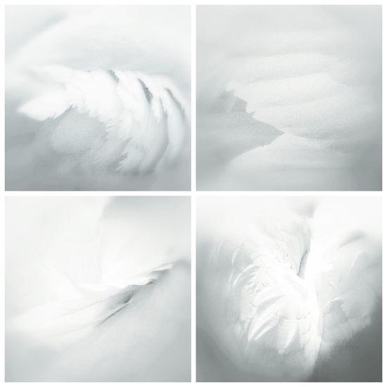 Swan Series