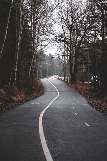 Empty road along bare trees in city