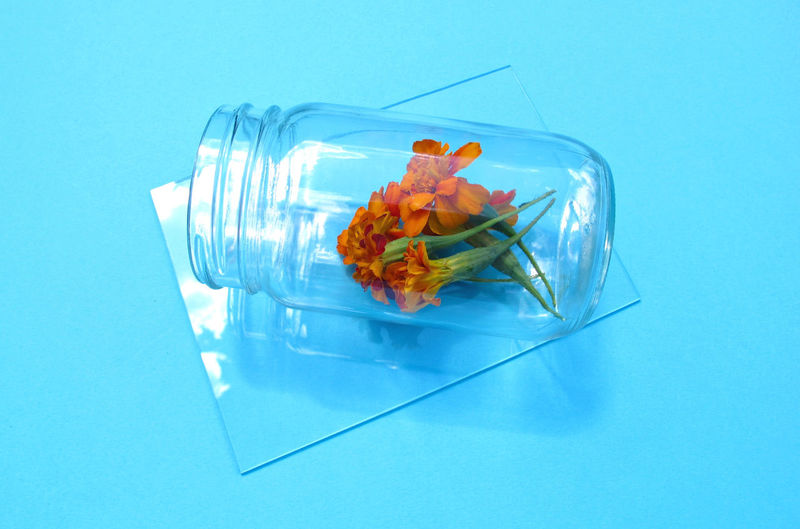 High angle view of marigold flowers in jar on blue background