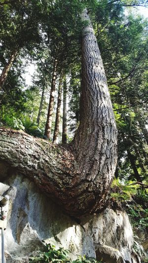 EyeEm Best Shots EyeEm Nature Lover Tree Close-up Scenics Growing Tranquil Scene Root Tree Stump Tranquility