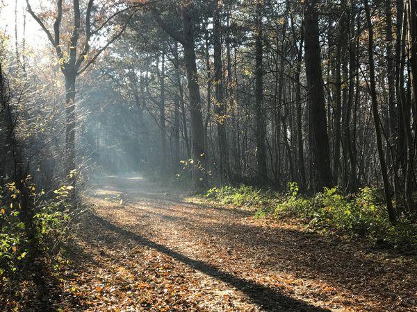 Zonnestralen in herfstbos. Robbenoordbos Zonnestralen BOS Sunrays Woods Forrest Herfst Autumn