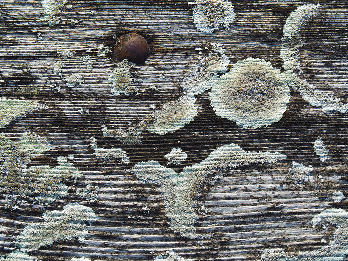 Backgrounds Bad Condition Deterioration Moss Mossporn Mould Mushrooms Pattern Ruined Rust Rusty Texture Textured  Wood Wood Wood - Material Wooden Patterns Pattern Pieces