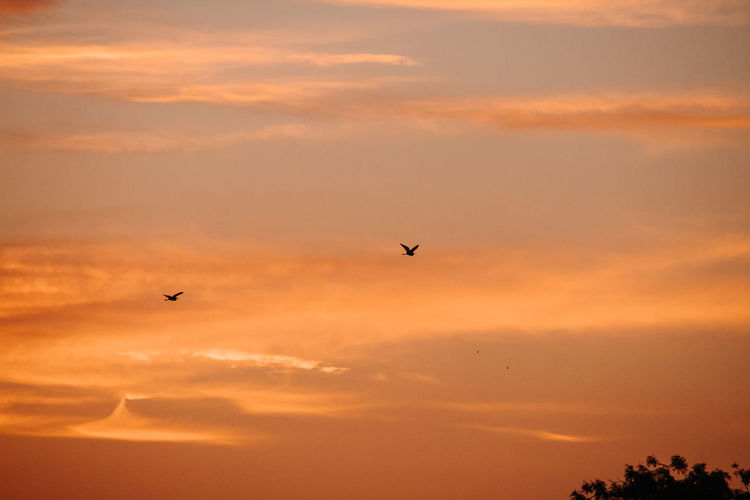 Bird Flying Sunset Vertebrate Animal Themes Animal Animals In The Wild Animal Wildlife Sky Beauty In Nature Cloud - Sky Orange Color One Animal Silhouette Mid-air Scenics - Nature No People Tranquil Scene Tranquility
