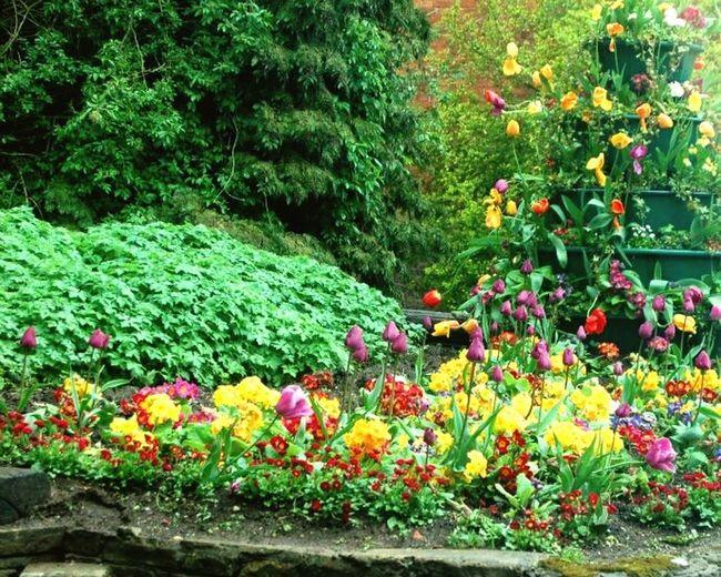 Color Palatte Banbury, England Village Garden