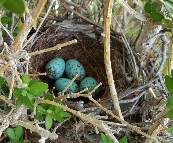 Birds Nest Wildlife & Nature In My Garden Taking Photos Walking Around Beautiful