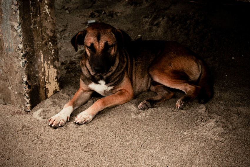 Dog Love Dog Lover Dog Photographer Dog Photography Dog Portrait Dog❤ Eyeem Dog World OFFICIAL Photos Club 🐶🌍😄👍 I Love My Dog Eyeem Philippines Dog Escape Funy Dogs Dog Are Fun Dogs On The Beach Dog Art