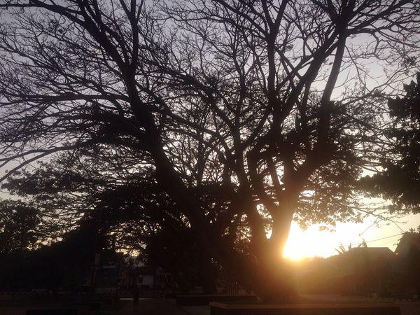 It's called Morning EyeEm Sun Tree Nature Sunlight Silhouette Sky Beauty In Nature Scenics Outdoors EyeEm Best Shots EyeEmBestPics Eyeemphotography