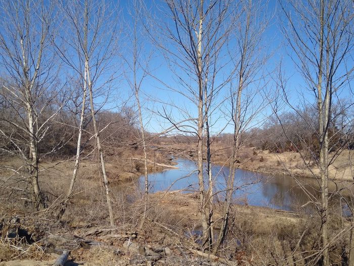 Bare trees on riverbank