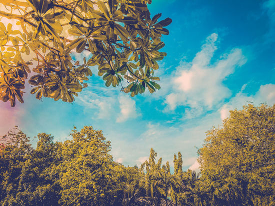 Tranquil Scene Green Color Plant Part Branch Outdoors Change Low Angle View No People Beauty In Nature Autumn Tree Tranquility Day Plant Sky Cloud - Sky Growth Nature Leaf Blue