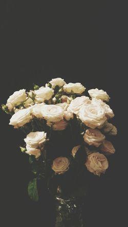 Flowerporn Flowerpower Vintage Roses