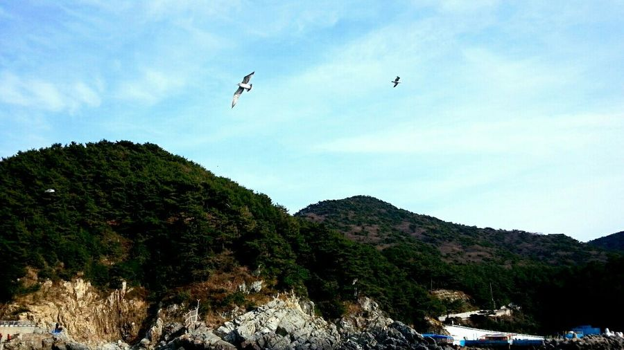 부산 Busan
