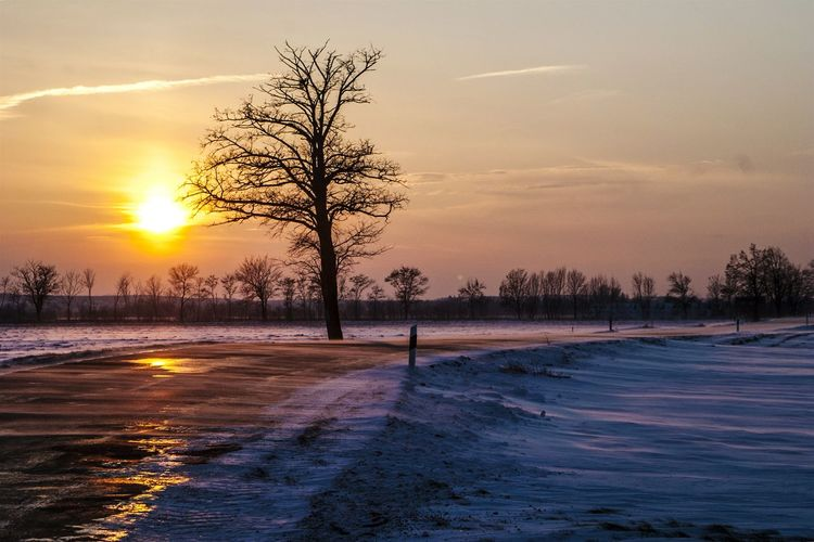 Cold Days Wintersun Winter Trees Winter Landscape Landscape_photography Winter Landscape Country Road Empty Road My Country In A Photo