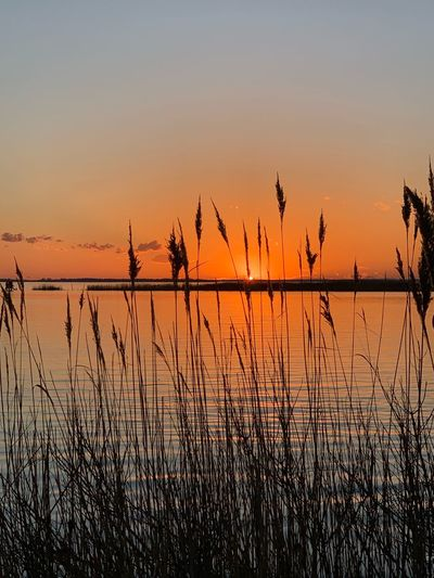 Be still and know Chesapeake Bay Bay Bay Of Water EyeEm Selects Sunset Sky Water Tranquility Scenics - Nature Beauty In Nature Silhouette Tranquil Scene Reflection Orange Color No People Nature Non-urban Scene Outdoors Plant Idyllic Clear Sky