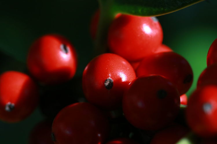 Beeren Stechapfel Canon_photos Canon Garten Beauty In Nature Fruit Red Agriculture Healthy Lifestyle Water Close-up Food And Drink