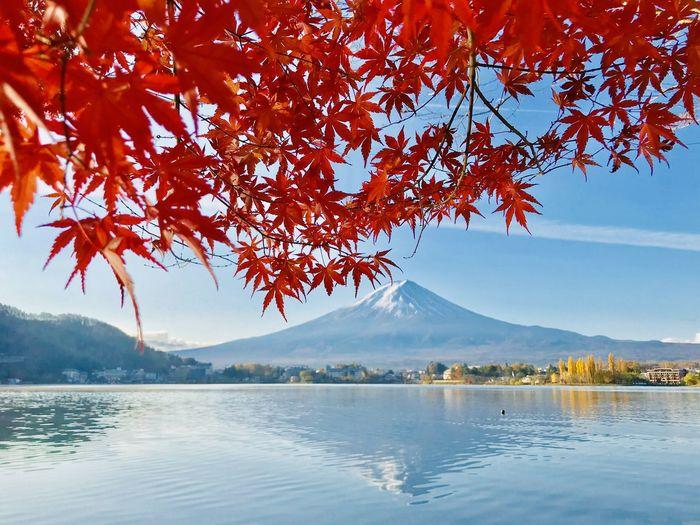 紅楓與富士山 Beauty
