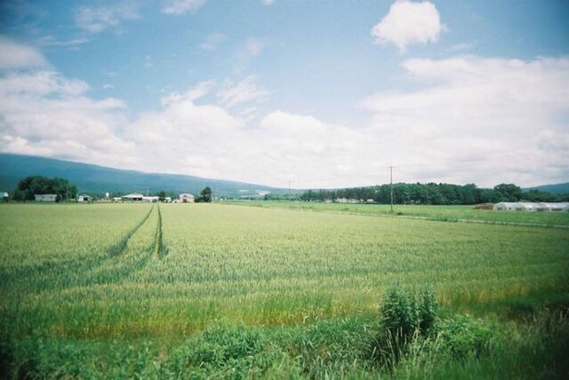 Field Landscape Green Color Agriculture Rural Scene Sky Nature Growth Scenics Tranquil Scene Grass Tranquility Beauty In Nature Outdoors Cloud - Sky No People Furano Hokkaido Film Film Photography Filmisnotdead Toycamera EyeEmNewHere Snap Trip Photo The Great Outdoors - 2017 EyeEm Awards