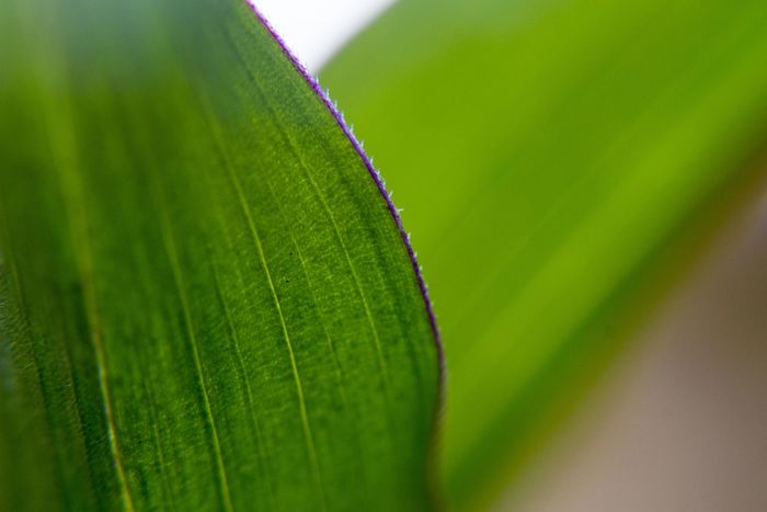 Extreme close up of a leaf. Macro Photography Backgrounds Beauty In Nature Close-up Day Extreme Close-up Fragility Freshness Green Color Growth Leaf Leaf Vein Leaves Macro Natural Pattern Nature No People Outdoors Palm Leaf Plant Plant Part Selective Focus Vulnerability