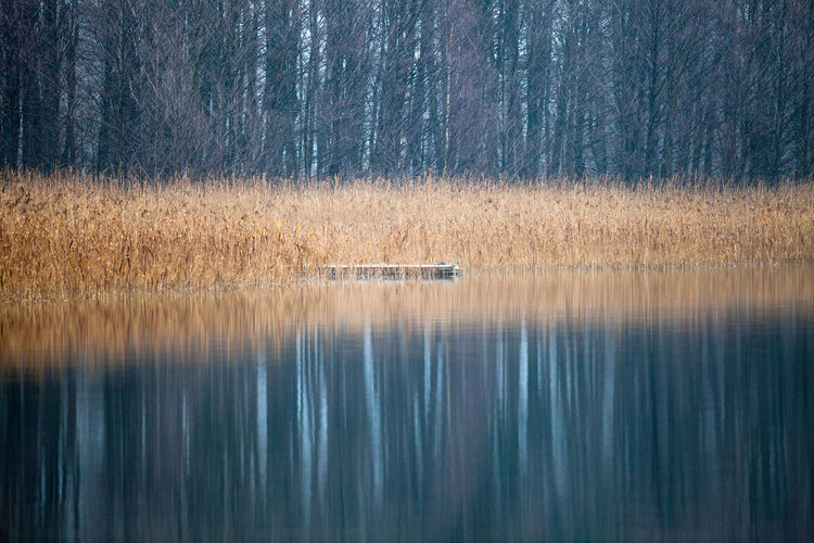 Calm Horizontal Symmetry Lake Lakeshore Majestic Mystery Outdoors Pond Reflection Remote Rippled Showcase: December Standing Water Symmetry Tranquil Scene Tranquility Tree Water Waterfront Landscapes With WhiteWall