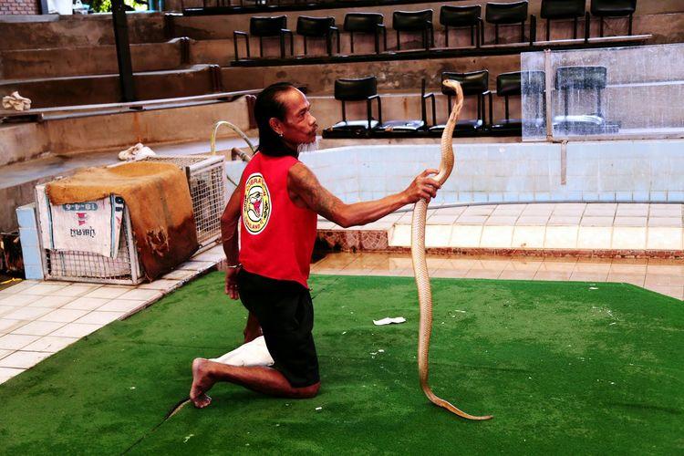 Thailand Bangkok Snake Snake Show Cobra Man Photography First Eyeem Photo EyeEm Gallery EyeEm Best Edits