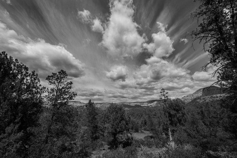 Arizona Beauty In Nature Cloud - Sky Grass Growth Idyllic Landscape Mountain Nature Non Urban Scene Non-urban Scene Outdoors Plant Remote Scenics Sky Tranquil Scene Tranquility Tree The Great Outdoors - 2016 EyeEm Awards Blackandwhite