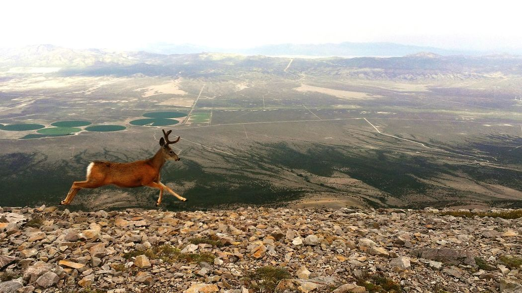 Mountain Deer Nature Adventure Hiking