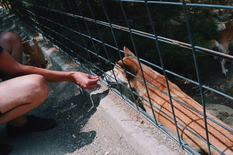 Close-up of man feeding dog