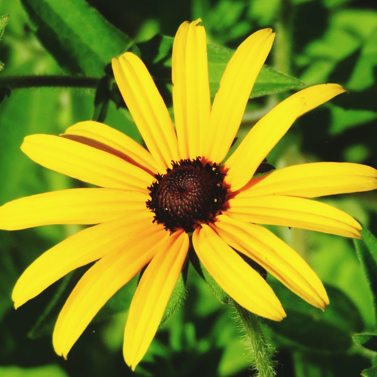 flower, fragility, yellow, petal, flower head, growth, freshness, beauty in nature, nature, pollen, plant, day, focus on foreground, close-up, no people, blooming, outdoors, black-eyed susan