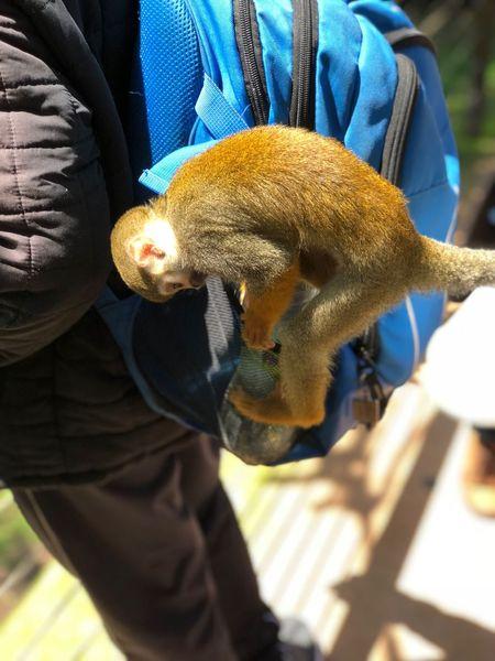 Bring the monkey on the bag 2 Worlds Met Monkeys Rule One Animal