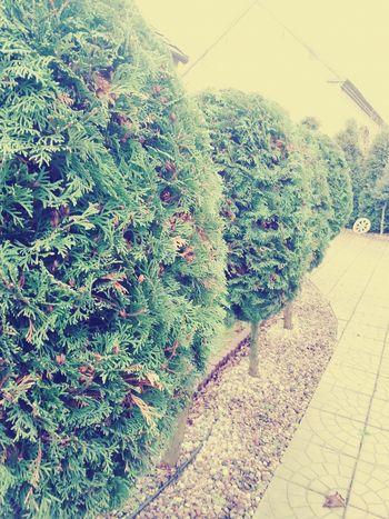 Trees Garden Nature