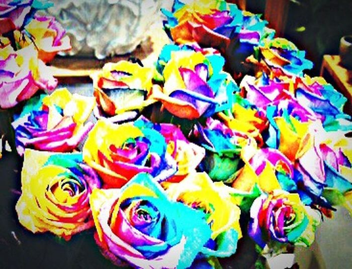 Rose - Flower Rainbow Rose Colorful Flowers