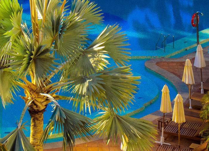Poolside palm Blue No People Outdoors Palm Tree Pool Poolside Travel Destinations Vacation Week On Eyeem