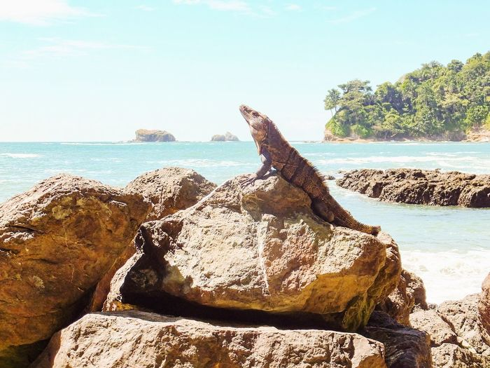 Costa Rica Manuel Antonio National Park Nature Travel Rain Forest Horizon Over Water Beach Sea Animal Themes Animals Animals In The Wild Beauty In Nature Scenics Iguana No People Miles Away Been There. Perspectives On Nature This Is Latin America