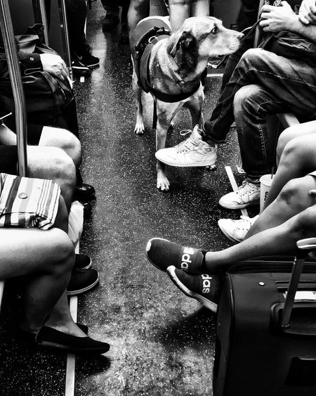 Scenes from the #l #cta #chicago #train #dog #blackandwhite #streetphotography Train Dog Blackandwhite Streetphotography Chicago Real People People Group Of People Lifestyles