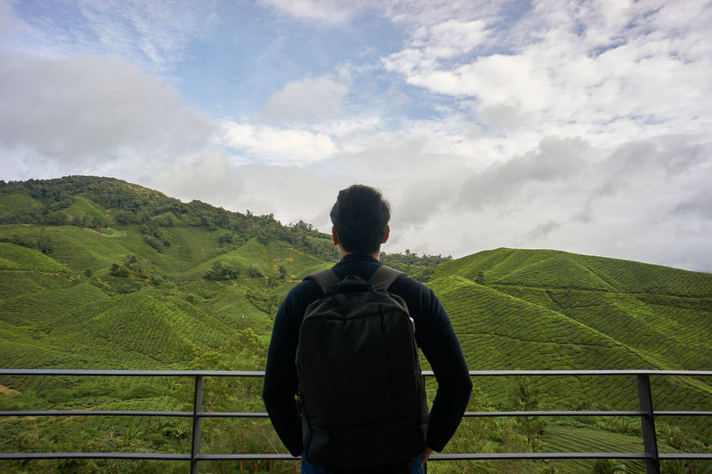 Rear view of man looking at tea plantation against sky